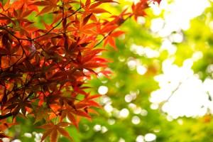 PPU_akakukouyoushitamomiji500-thumb-750x500-816