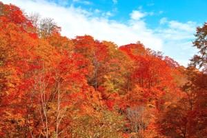 autumn-leaves_beiz.jp_S14014