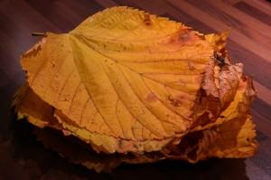 leaf-pile-231867_640